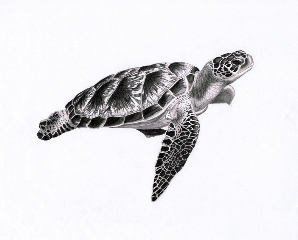Sea turtle 1 by punkymeadows on deviantart