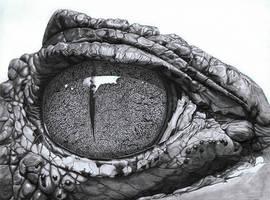 Eye Of The Caiman