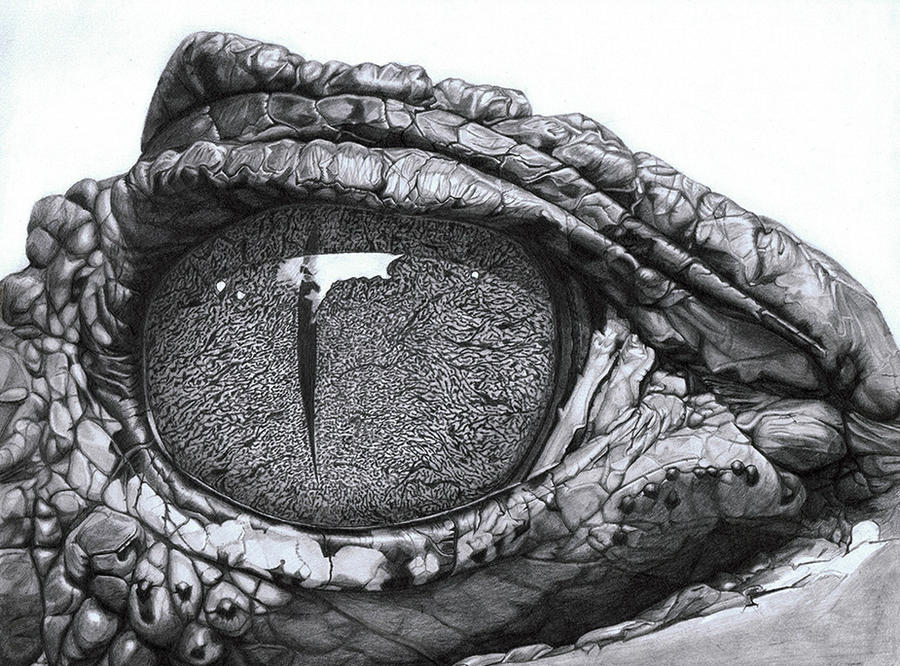 Eye Of The Caiman by PunkyMeadows on DeviantArt - photo#25