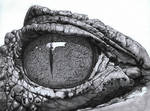 Eye Of The Caiman