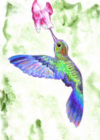 Humming Bird by EduardoSouza