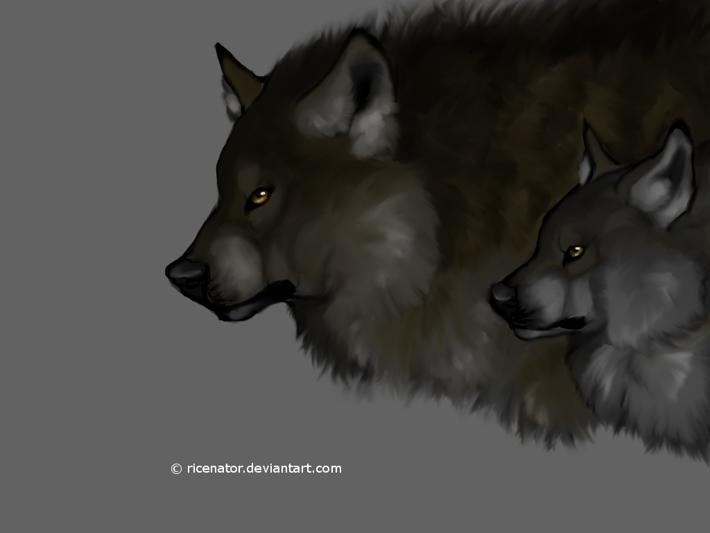 Dire wolf vs wolf - photo#12
