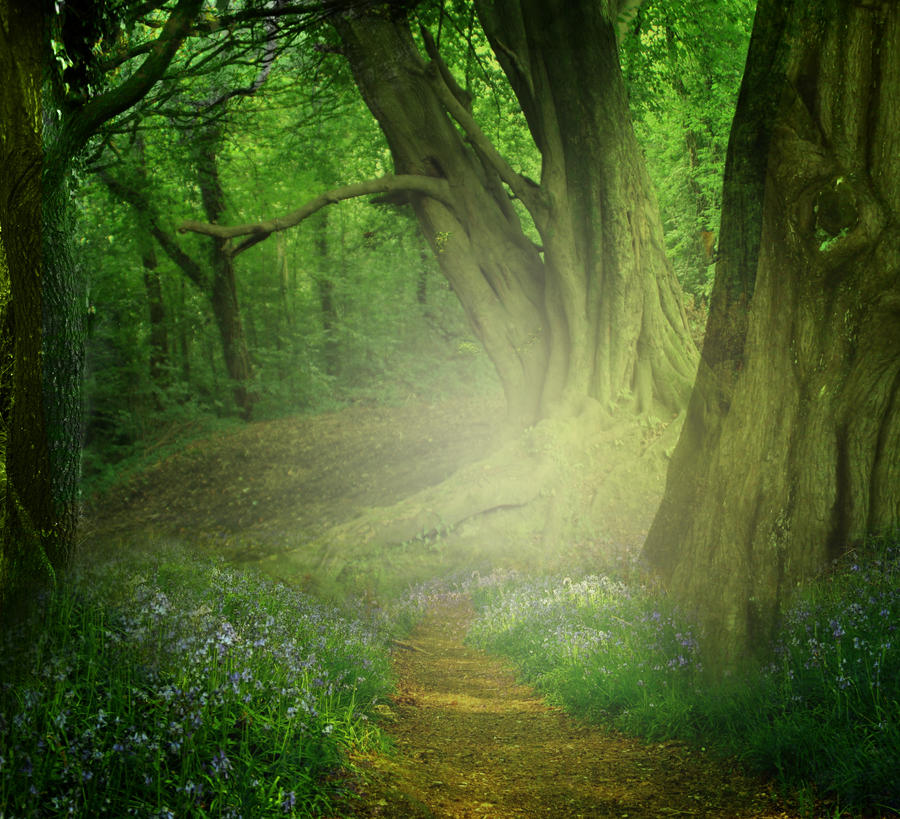 Image Result For Realistic Nature Scenes