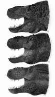 Three shades of Tyrannosaurus