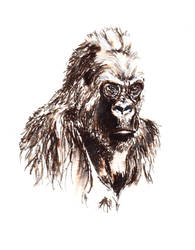 Gorilla by forget-the-sun