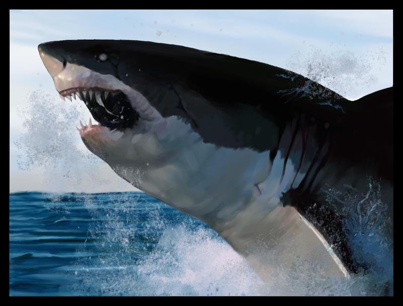 Rising Shark by harald-n
