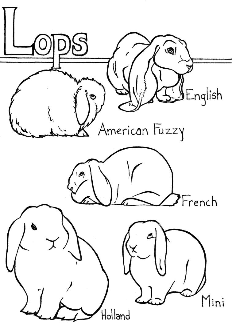 mini lop coloring pages | Lop rabbit breeds by Luna-Ortis on DeviantArt