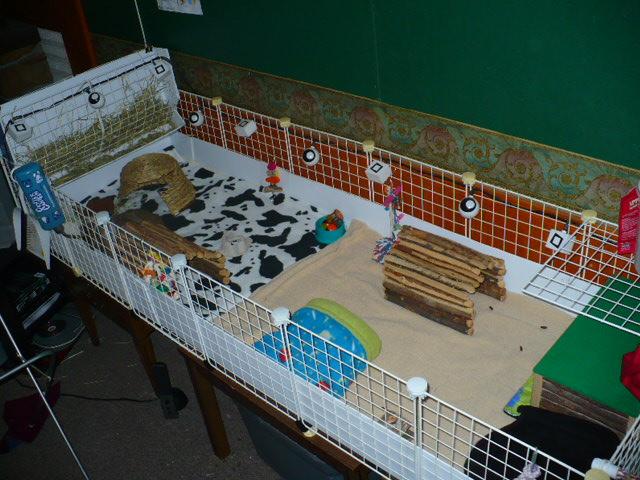 Как содержать морскую свинку в домашних условиях