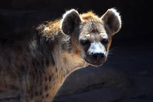 Hyena Queen by decideroffate
