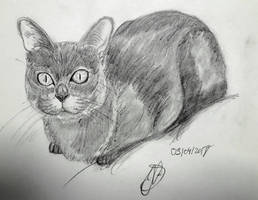 drawing exercice : cat by hieronymushoefer