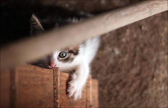 Stop hiding - be somebody