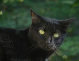 Saltmint's Profile Picture