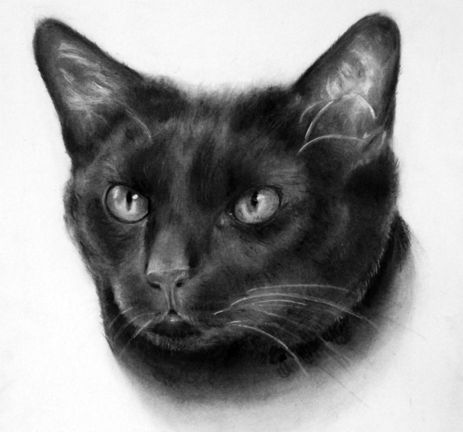 Jet Black Cat by Saltmint