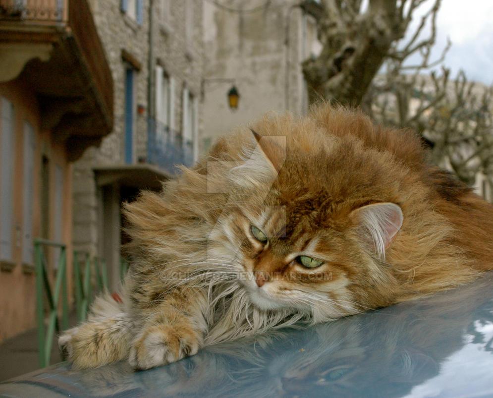 cat by chicvega