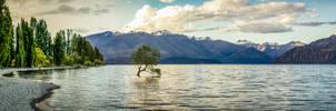 Tree in Water - Lake Wanaka New Zealand