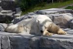 Polar bear [STOCK]