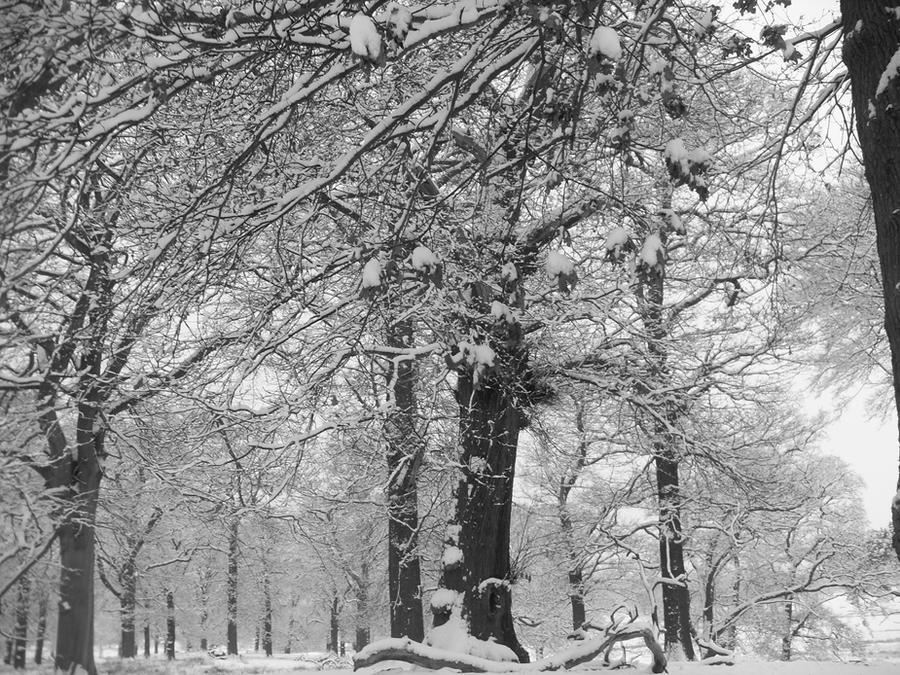 Winter Solitude by blackroselover
