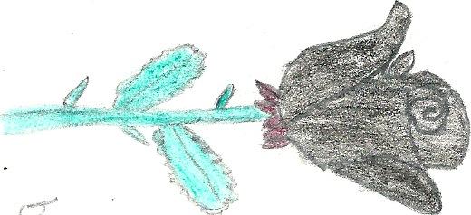 Blackrose drawing by blackroselover