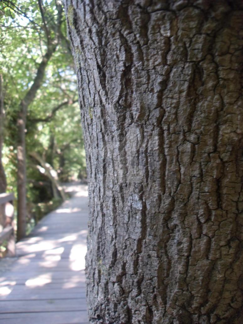 tree by blackroselover