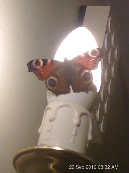 Butterfly on the light by blackroselover