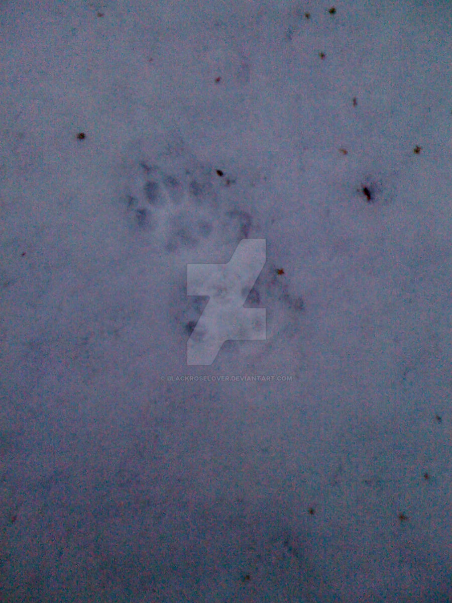 cat prints by blackroselover
