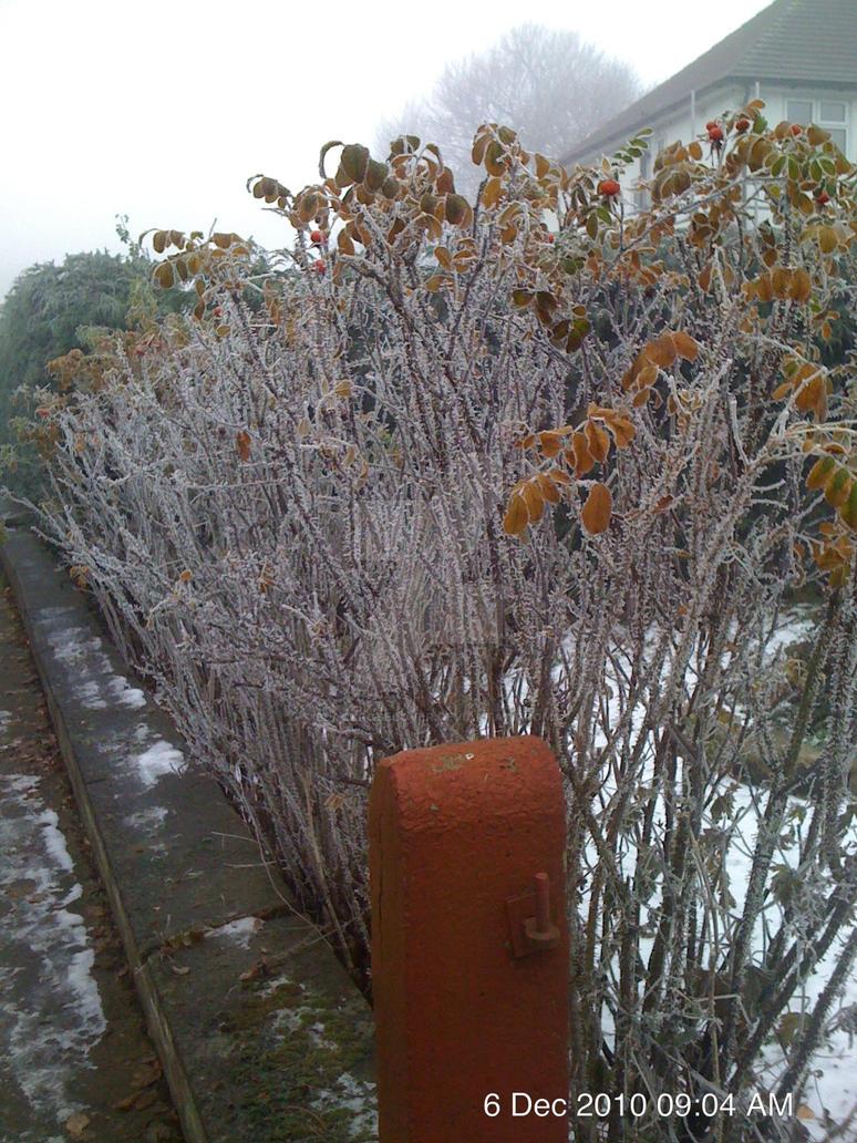 frost by blackroselover