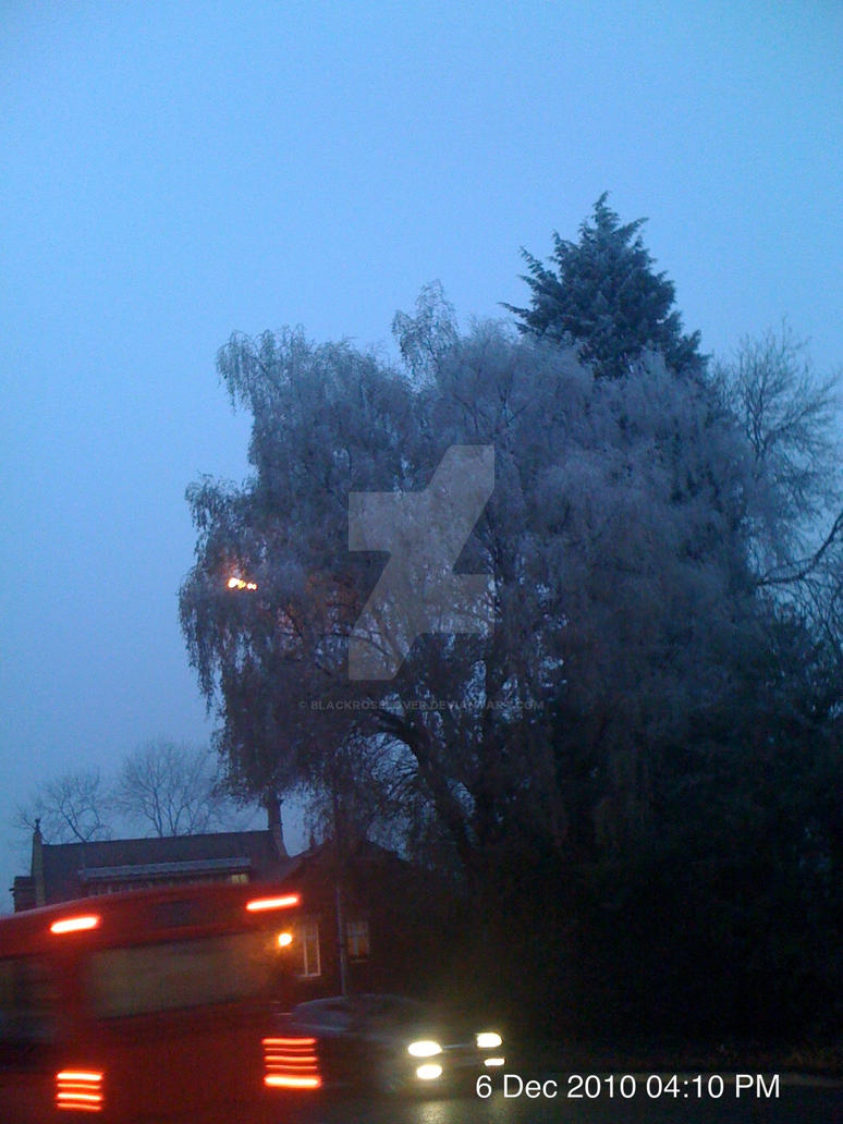 Tree and bus by blackroselover