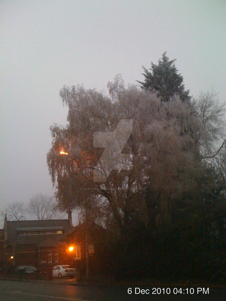 Tree with frost on by blackroselover