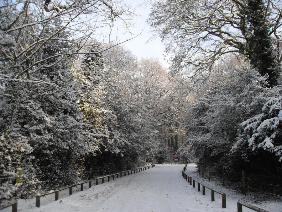 Snow tatton Park by blackroselover