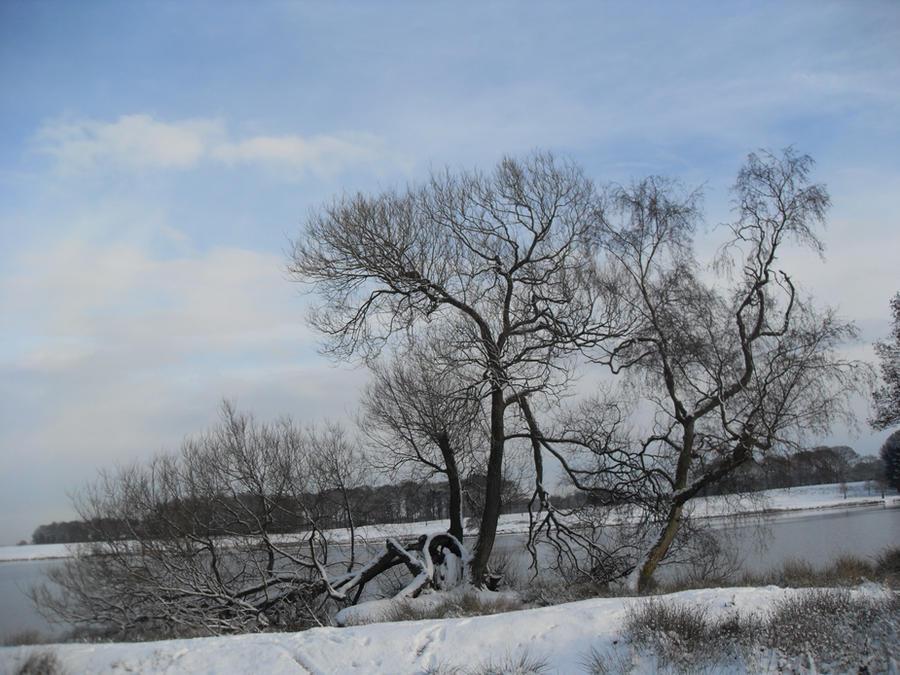 My Fav tree by blackroselover