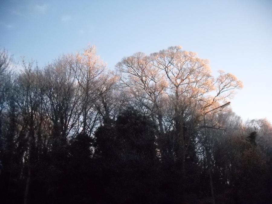 Tree in the sunlight by blackroselover