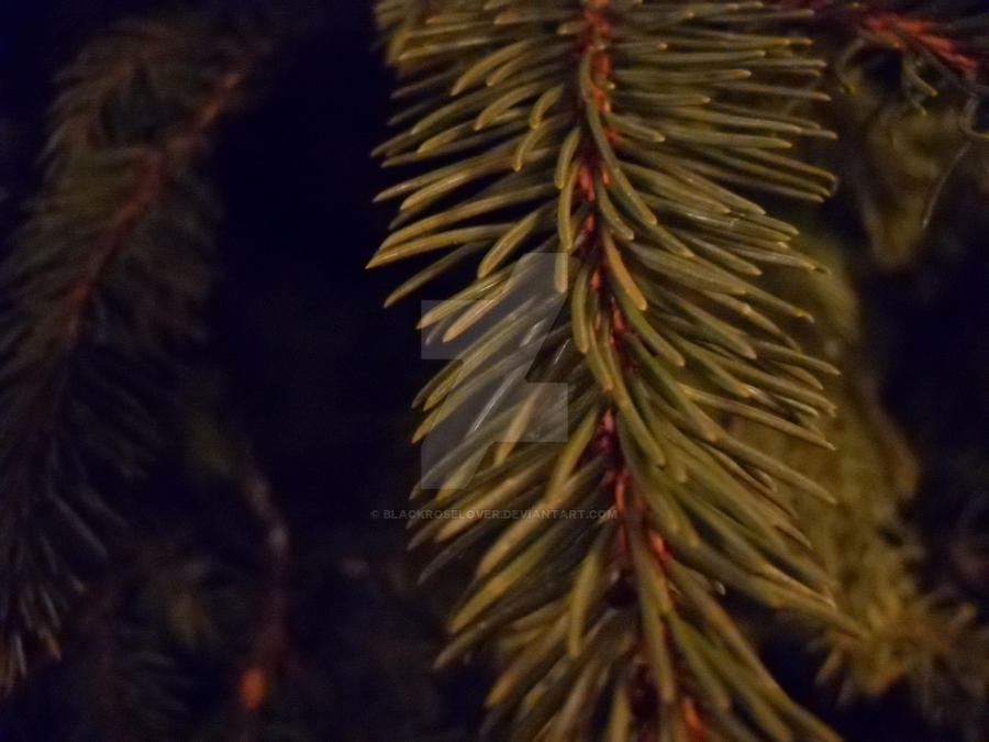 Pine close up by blackroselover