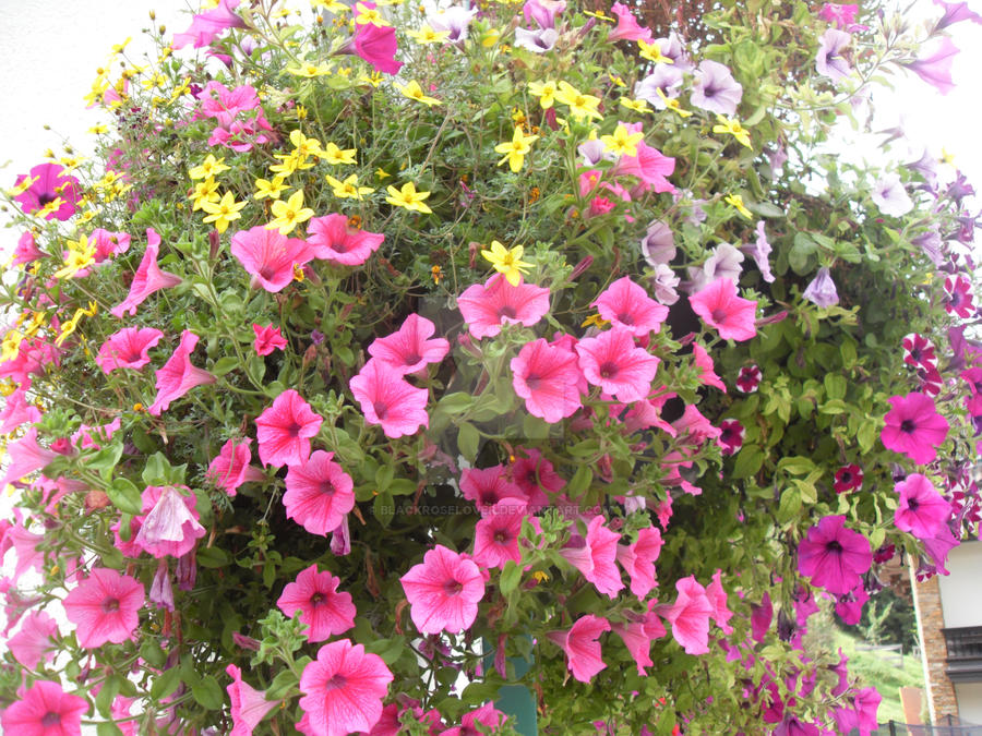 Flower box by blackroselover