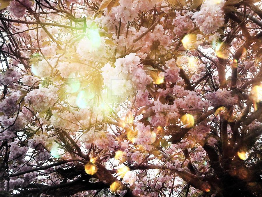 Tree flower Edit by blackroselover