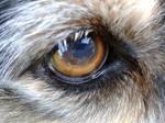 Tess Eye