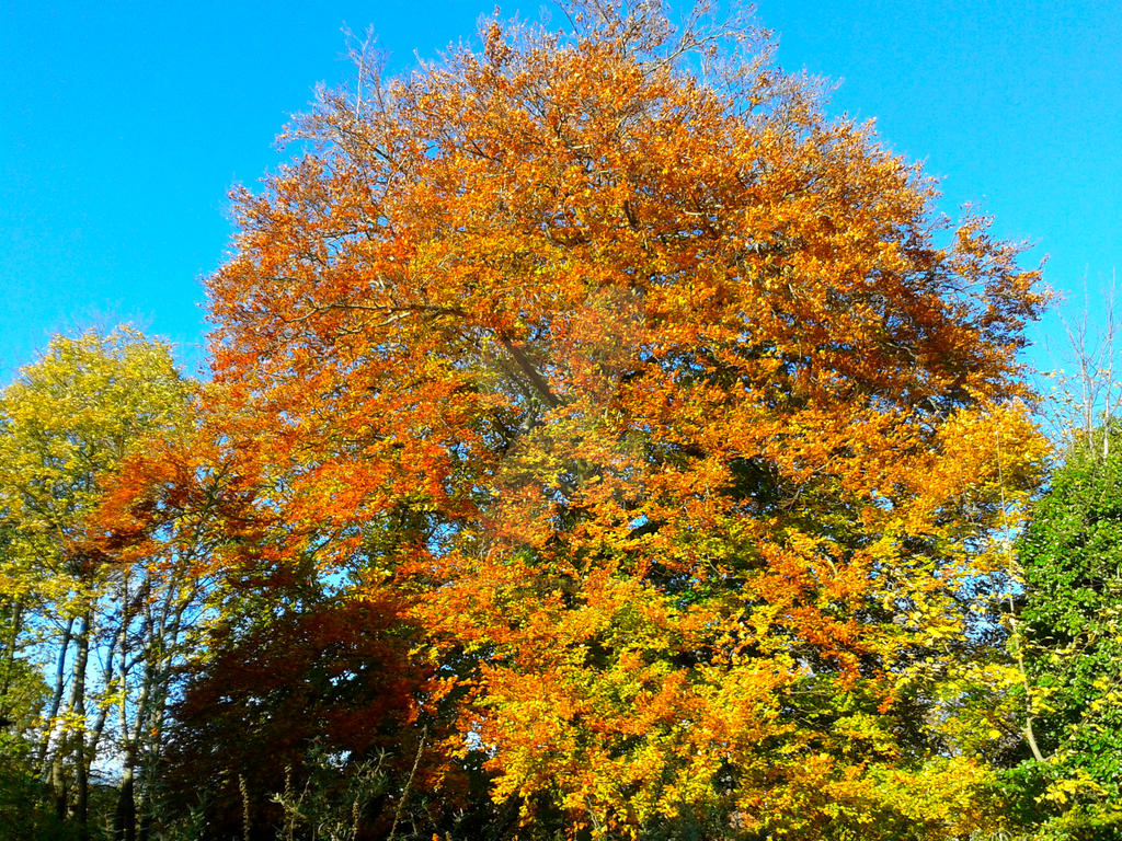Tree turning colour by blackroselover
