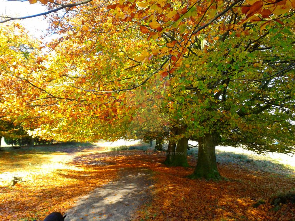 Trees in Tatton park by blackroselover