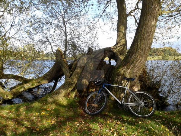 Bike front of tree by blackroselover