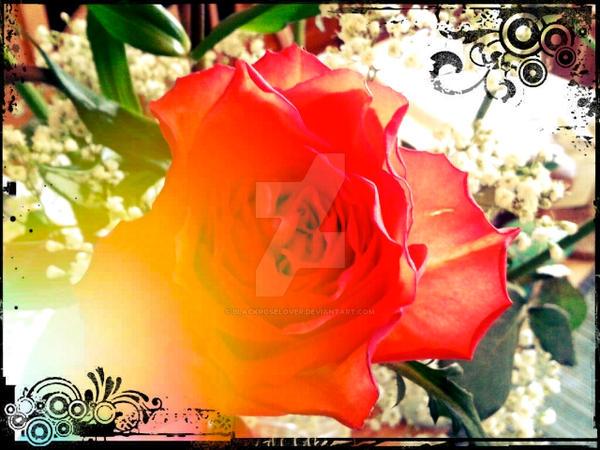 Rose Edit 87 by blackroselover