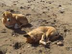 2 dogs on the beach
