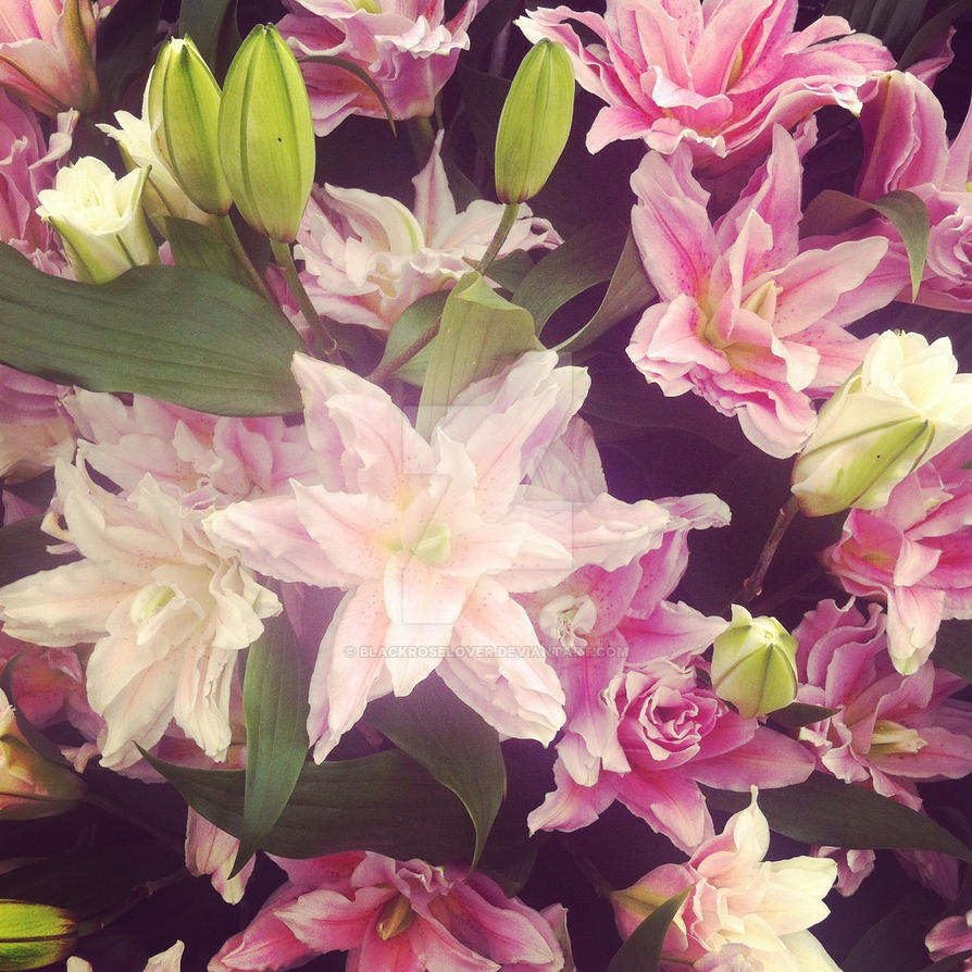 Lillies by blackroselover