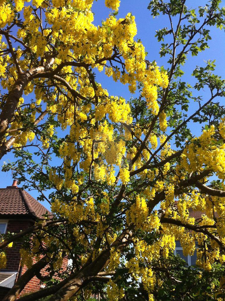 yellow by blackroselover