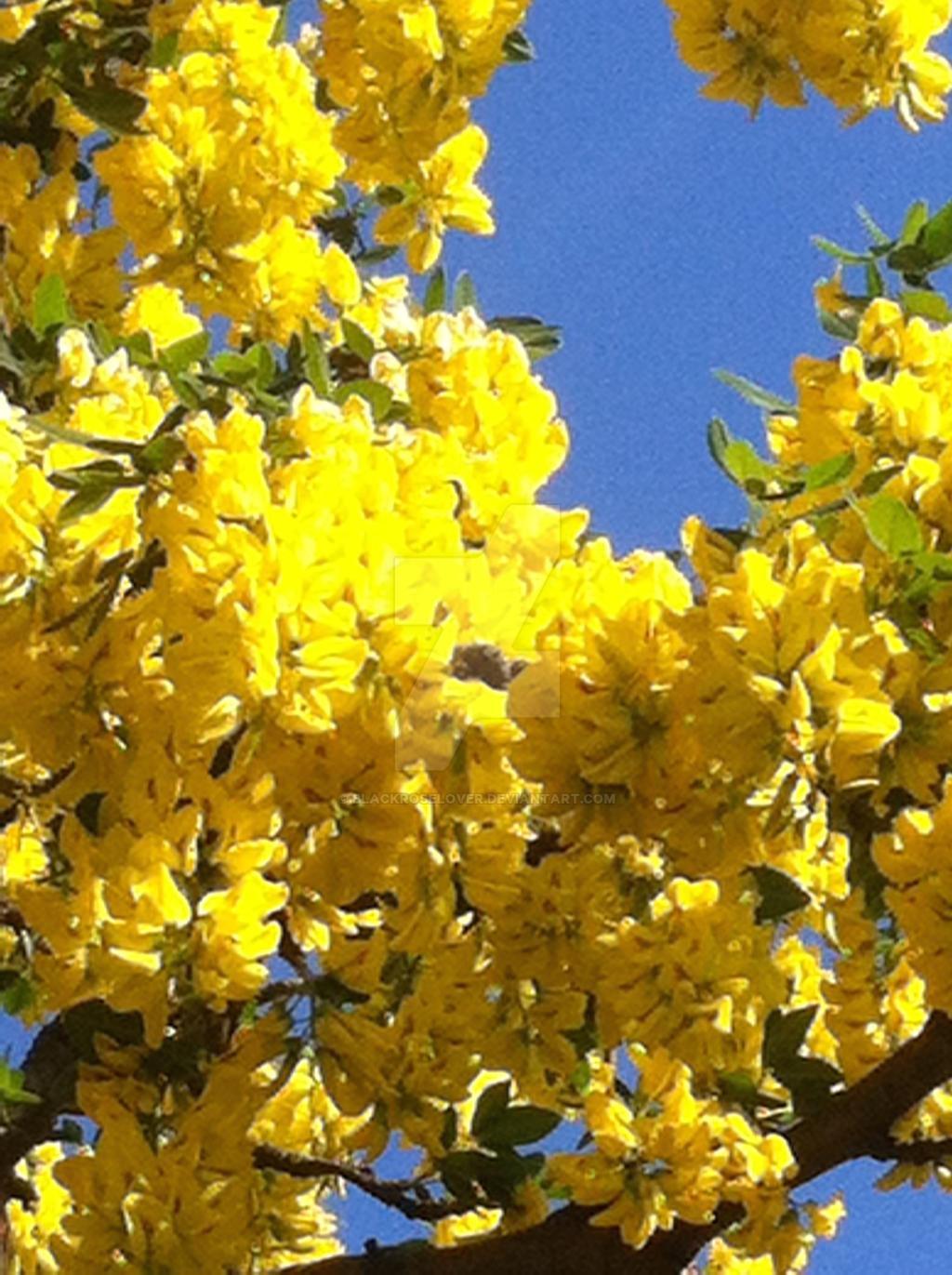 yellow 2 by blackroselover