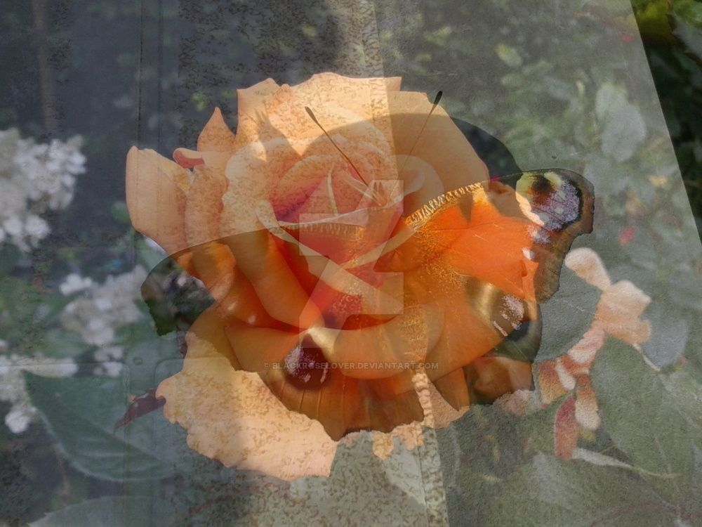 Lunapic Butterfly Rose by blackroselover
