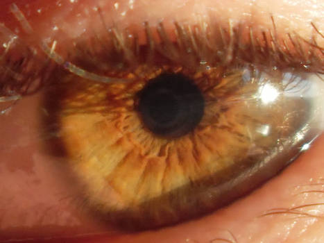 close up eye