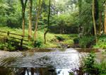 Wood, stream, road
