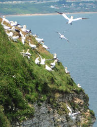 Home for sea birds - 4. Bird airport! by ahappierlife