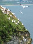 Home for sea birds - 4. Bird airport!