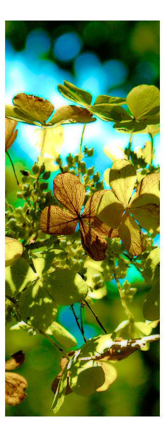 Sunny Leaves by jakethesnake999