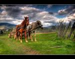 Horses by I-am-Avalon